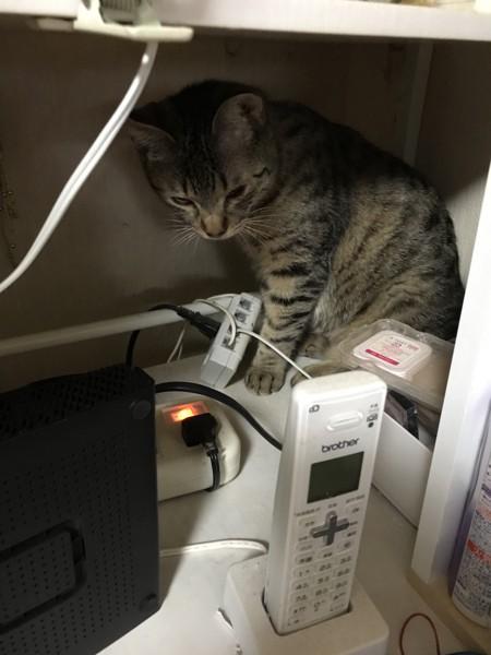 猫 キジトラ ラキの写真