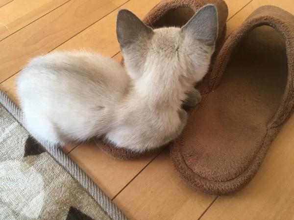 猫 雑種(ミックス) ネルの写真