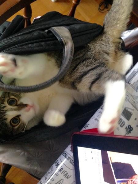 猫 キジトラ アリーの写真