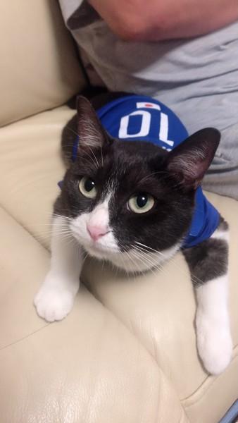 猫 雑種(ミックス) すみちゃんの写真