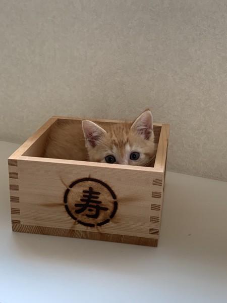 猫 不明 ひのきの写真