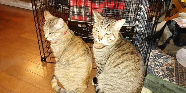 猫 雑種(ミックス) トラ&ジュニアの写真