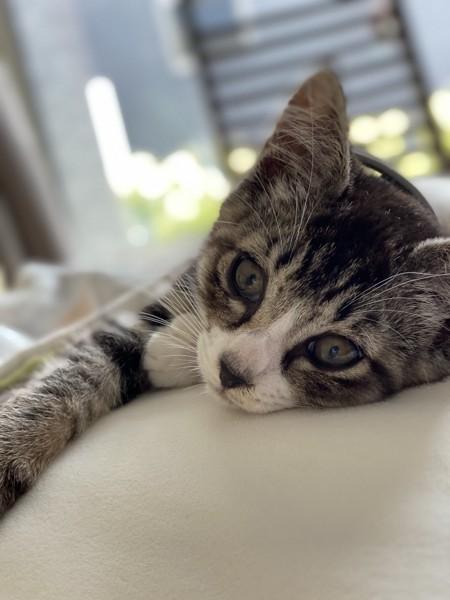猫 雑種(ミックス) なおちゃんの写真
