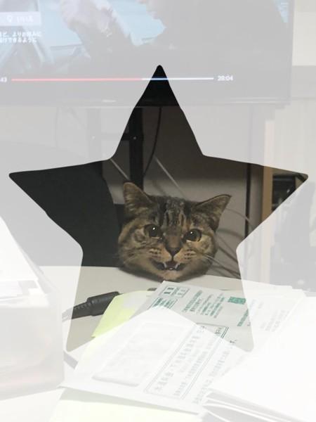 猫 雑種(ミックス) あおさの写真