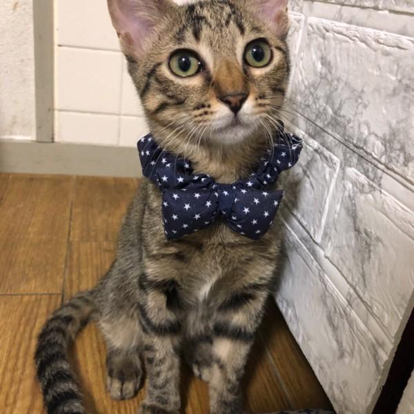 猫 キジトラ モカちゃんの写真