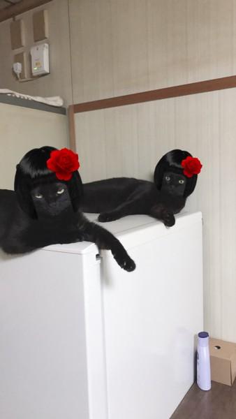 猫 雑種(ミックス) うにちゃん&みぃちゃんの写真