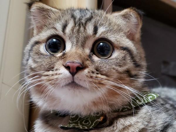 唐草模様のスカーフを巻いたまんまるな猫