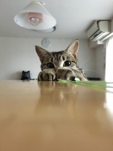 猫 ミックス りるの写真