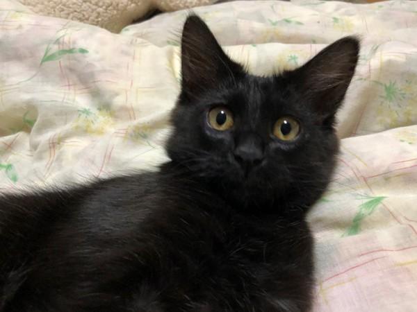 猫 黒猫 レンレンの写真