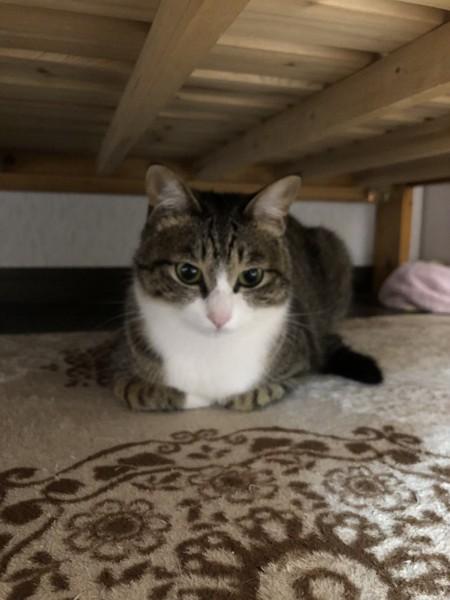 猫 キジトラ みーちゃんの写真