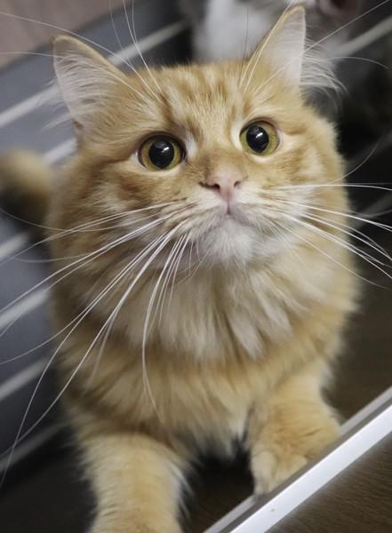 目が大きい猫