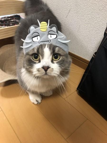 ニャースのかぶりものをした猫