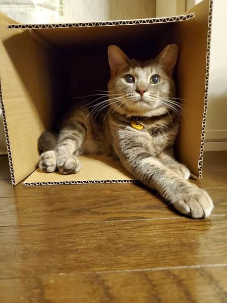 猫 雑種(ミックス) うにの写真
