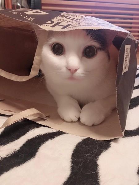 猫 雑種(ミックス) てぃなの写真