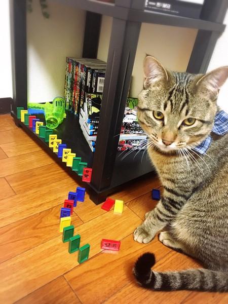 猫 キジトラ サスケの写真