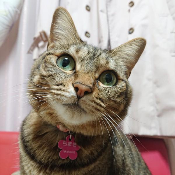 首をかしげる猫のアップ