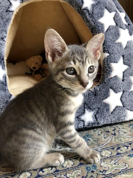 猫 雑種(ミックス) シナモンの写真