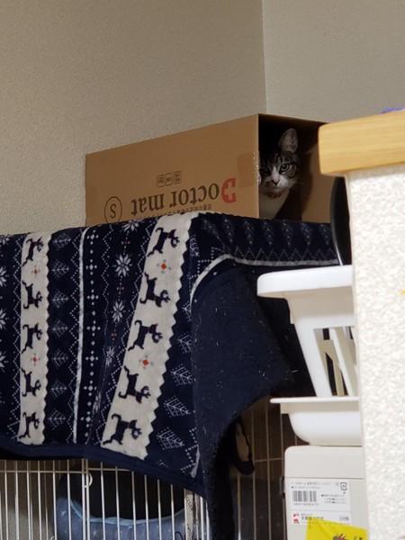 猫 雑種(ミックス) れれの写真