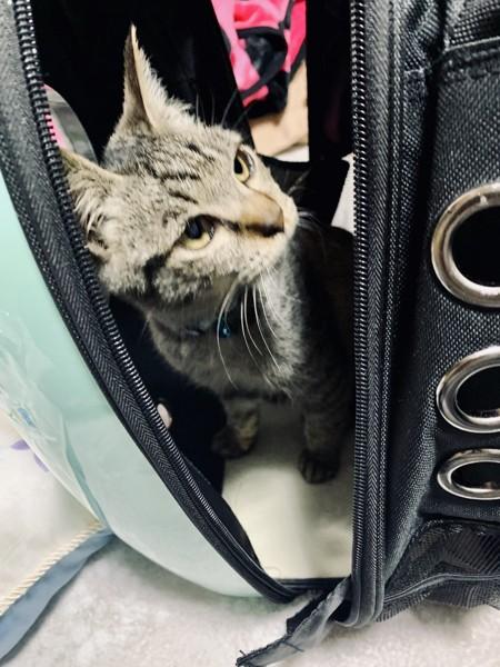 猫 雑種(ミックス) りんの写真