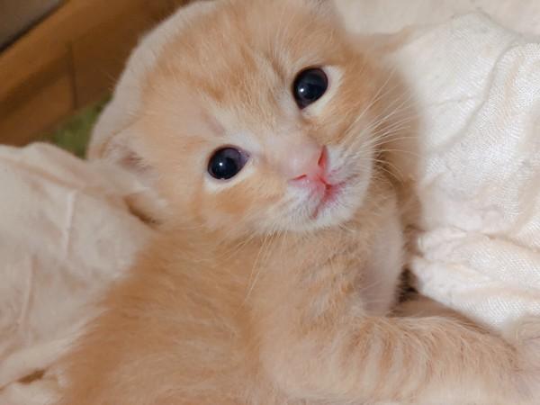 猫 茶トラ ソイくんの写真
