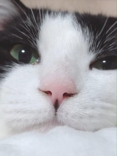 猫 雑種(ミックス) はち子の写真