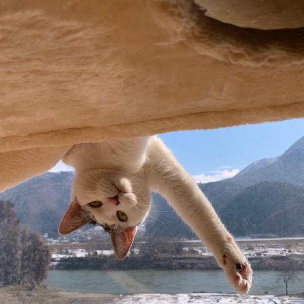 猫 雑種MIX チッちゃんクッちゃんの写真