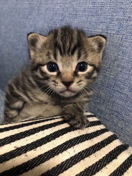 猫 日本猫 そらの写真