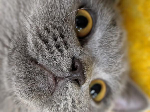 カッパーの猫