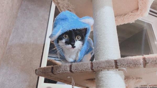 猫 雑種(ミックス) まめたんの写真