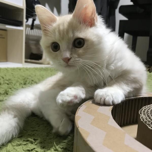 猫 ミックス もなかの写真