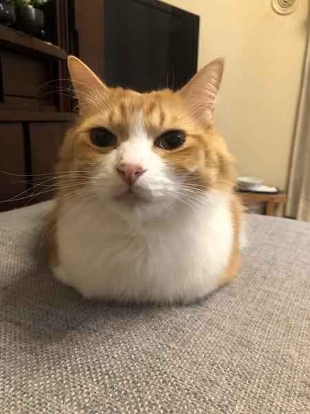 猫 ミックス めかぶの写真