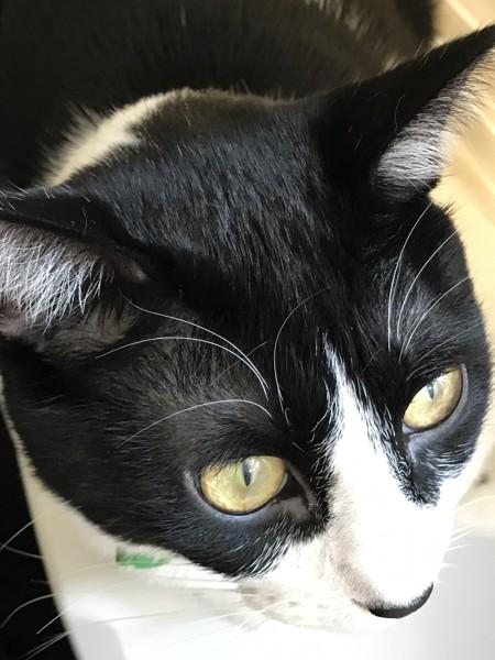 猫 雑種(ミックス) どんさんの写真
