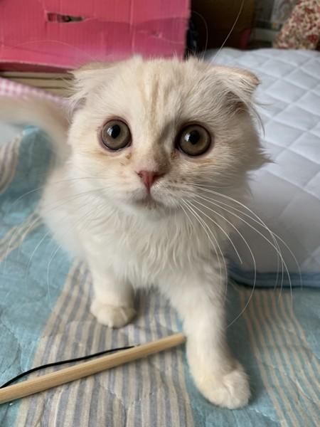 まんまるな顔の子猫