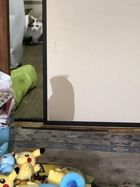 猫 雑種(ミックス) コトの写真