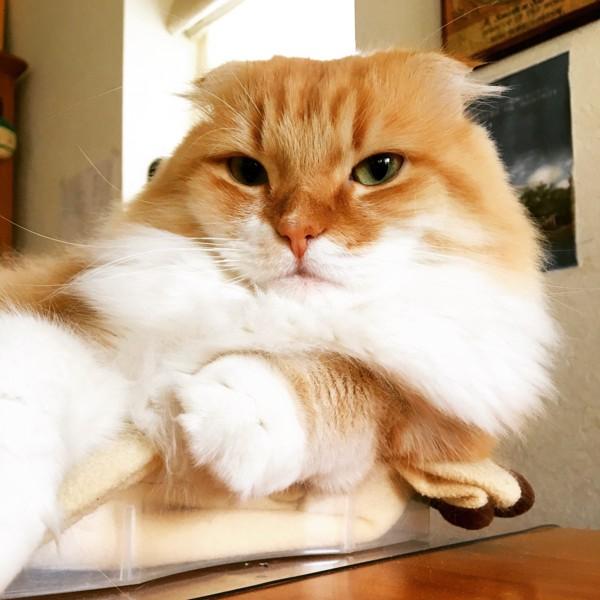 ふわふわでまんまるな猫