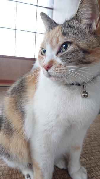 新聞の間から顔を出す三毛猫