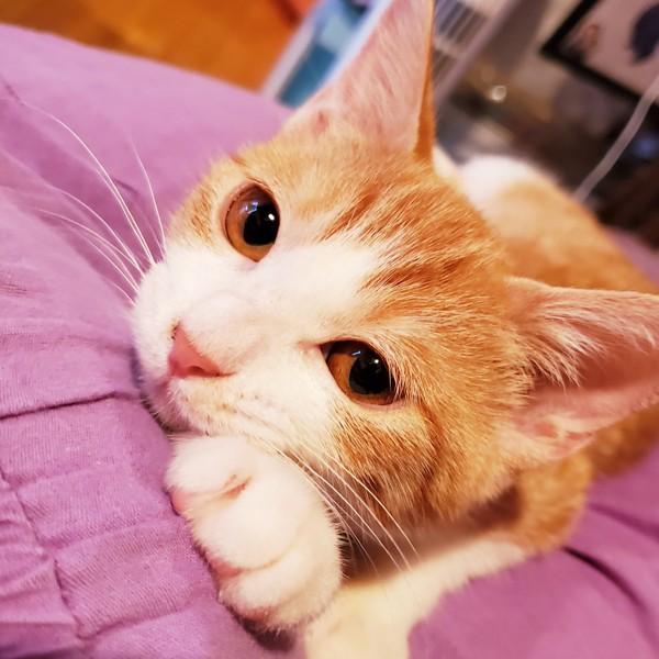 猫 茶白トラ ひまわりの写真