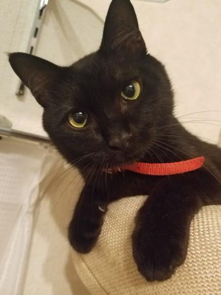 猫 雑種(ミックス) コタローの写真