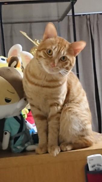 猫 雑種(ミックス) チャー&キキの写真
