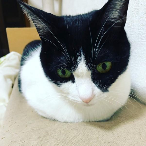 猫 白猫 ごましおの写真