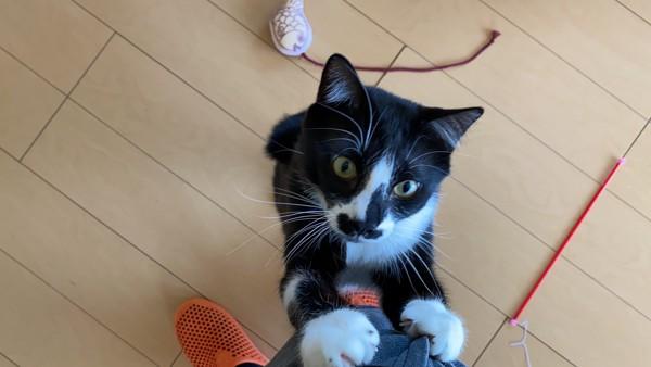 猫 ミックス ペコの写真