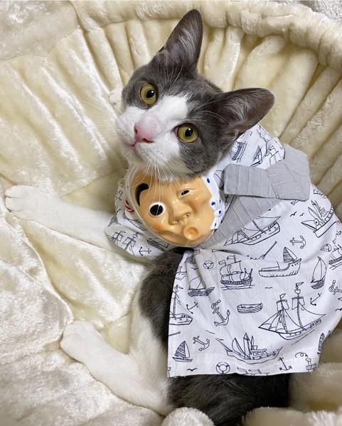 猫 雑種 かんぱちの写真