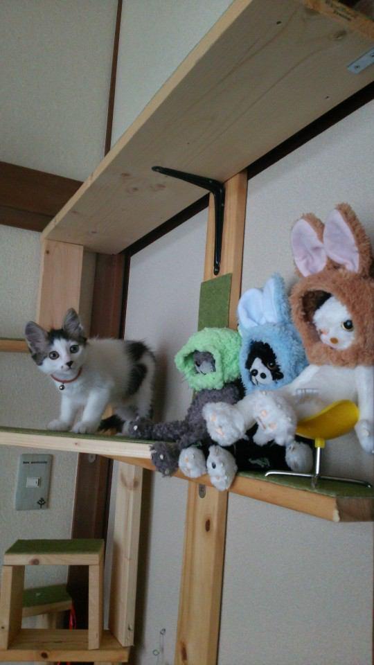 猫 雑種(ミックス) こまの写真