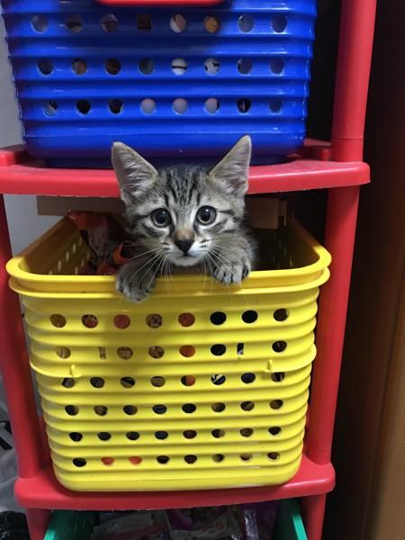 猫 キジトラ みかんの写真
