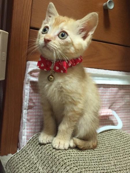 猫 茶トラ モカの写真