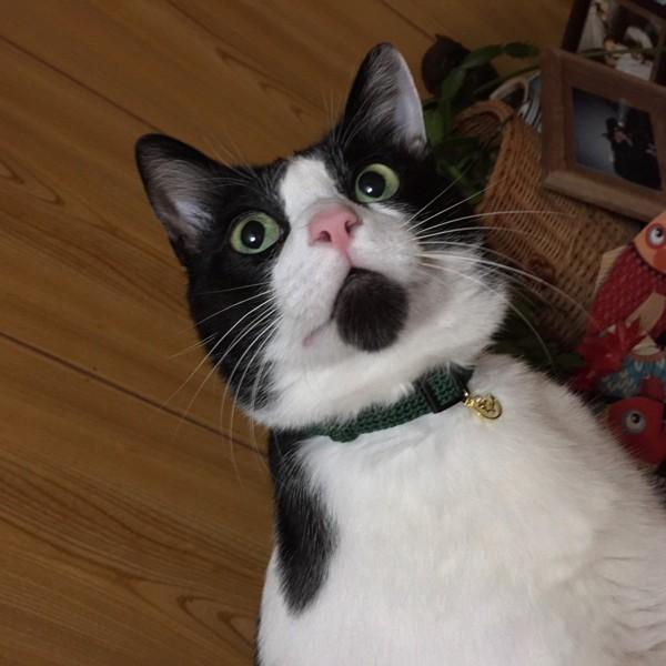 猫 黒ブチ ハッチの写真
