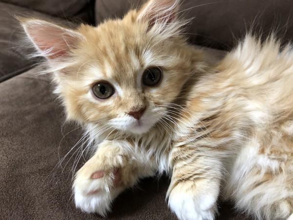 猫 スクーカム 猫麻呂の写真