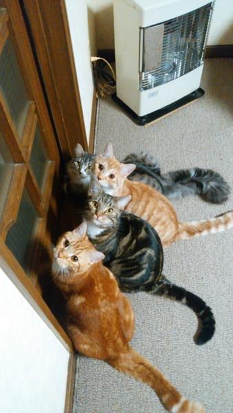 猫 雑種(ミックス) いち、そら、さん、はるの写真