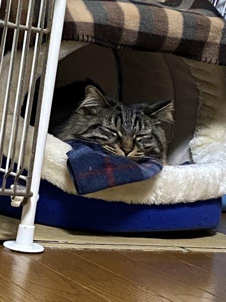 猫 キジトラ エアの写真
