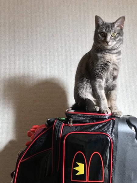 猫 雑種(ミックス) なつめの写真